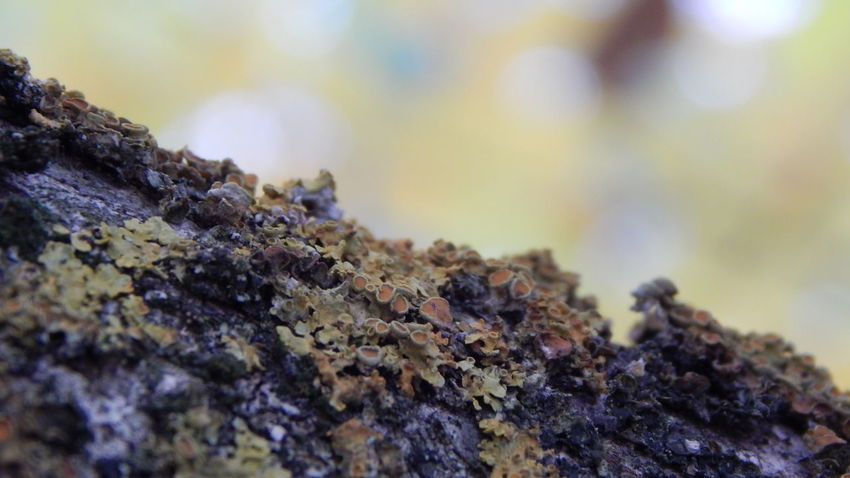 Beauty In Nature Close-up Extreme Close Up Focus Of Foreground Nature Selective Focus Surface Level Tree Trunk