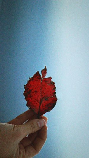 Leaf Red Showcase: January Hand Photography Human Blue Close-up Focus Selectivefocus