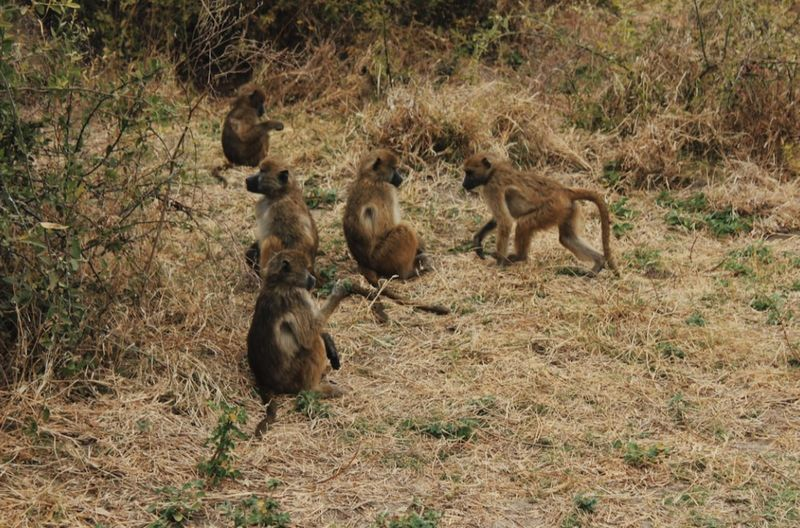 Monkeys in a forest