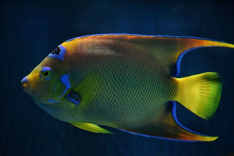 Animal Markings Animal Themes Aquatic Life Beauty In Nature Close-up Colorful Multi Colored Sea Life Swimming UnderSea Underwater Wildlife