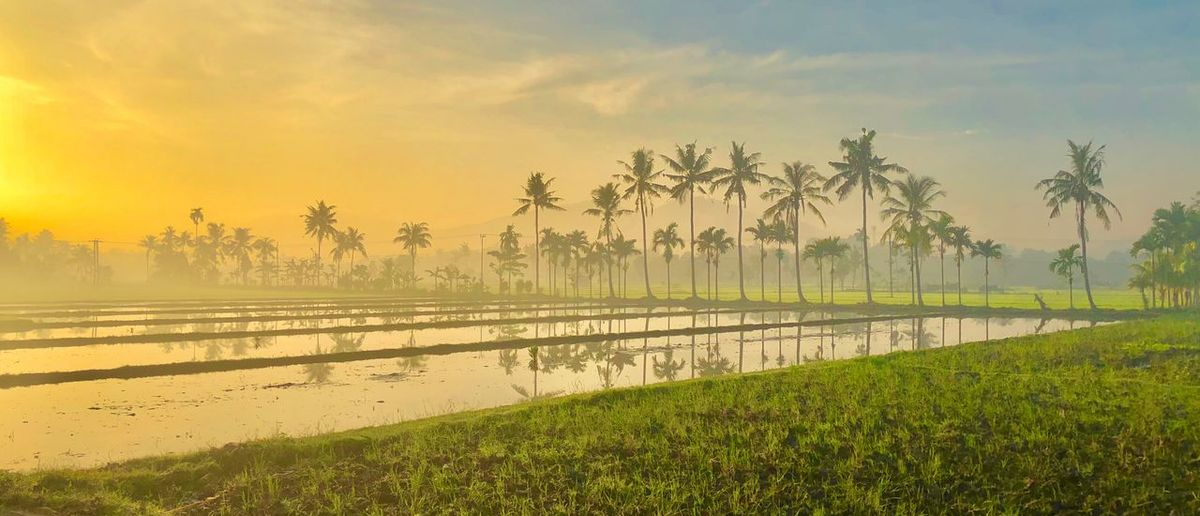 Sawah Ahpictures Agus_harianto_photography Agushariantophotography Sky Water Scenics - Nature Beauty In Nature Plant Tree Tranquility Tranquil Scene Nature No People Growth Cloud - Sky Land Lake Outdoors Landscape Idyllic Agriculture Rural Scene
