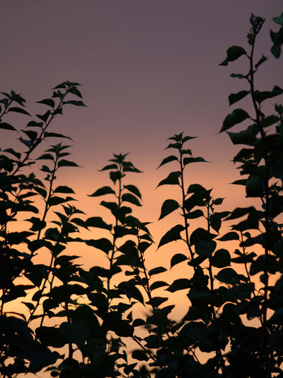 Close-up of silhouette plants against sky