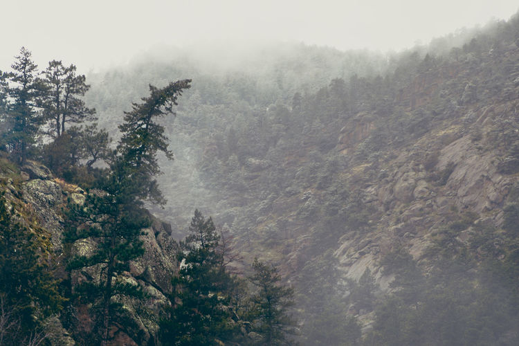 Beauty In Nature Climate Cold Temperature Coniferous Tree Day Environment Fog Forest Idyllic Land Mountain Nature No People Non-urban Scene Outdoors Pine Tree Plant Scenics - Nature Tranquil Scene Tranquility Tree Winter