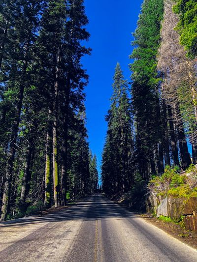 Road amidst trees in forest against clear sky