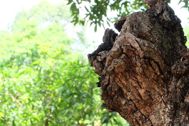 Stumps of trees