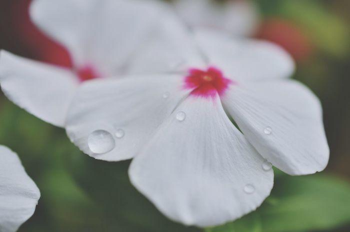 EyeEm Best Shots - Flowers 雨のあと Flowers Nikon