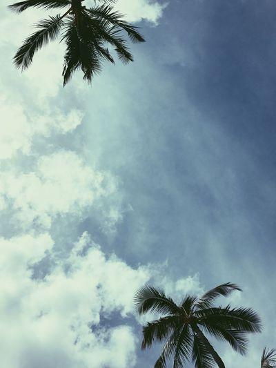Mood First Eyeem Photo Hawaii Beautiful Paradise Weather Travel