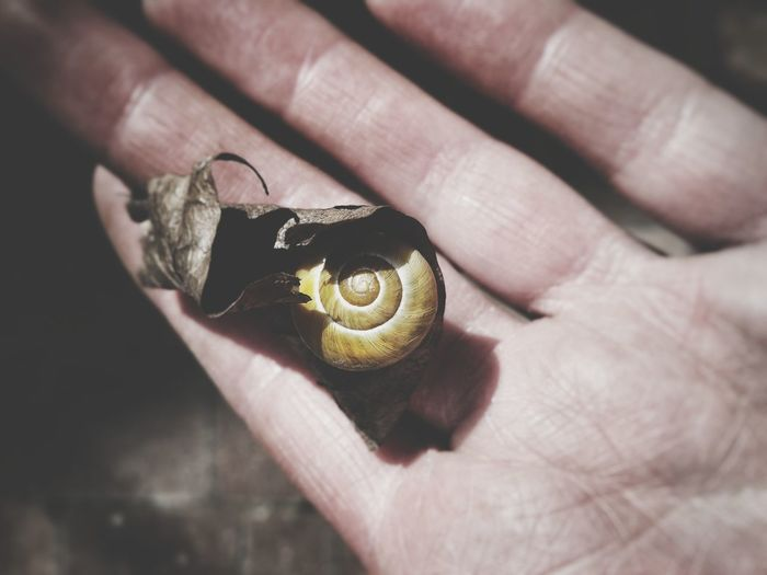 Cropped hand of person holding snail covered with dry leaf