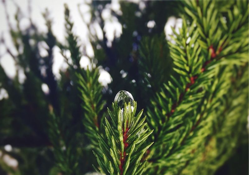 Growth Beauty In Nature Nature Green Color Freshness Outdoors Plant Focus On Foreground Close-up Light Chrystal RainDrop Raindropshot Rain Tree Upside Down Round Round And Round Round Shape The Week On EyeEm