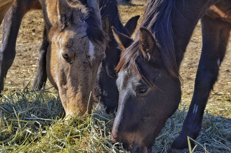 Day for sharing Horses Horse Horsesofinstagram Horses_of_instagram Horsestagram Wild Grass Instahorses Ilovemyhorse Animals In The Wild Mammal Animal Themes Day No People Outdoors One Animal Nature Close-up
