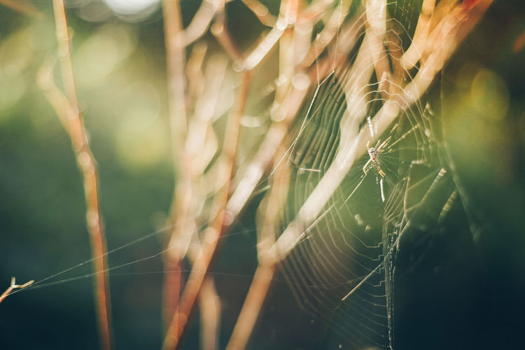 Spider web with