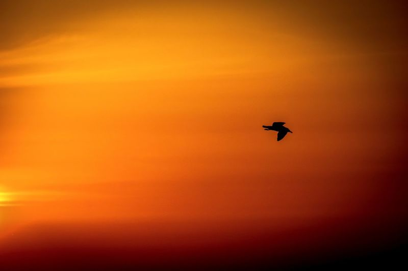 Fujifilm X-T20 Orange Sky Seagull EyeEm Gallery EyeEm Best Shots EyeEm Selects EyeEm Nature Lover Beauty In Nature Sunset Orange Color Sky Silhouette Flying Air Vehicle Mode Of Transportation Beauty In Nature Nature Animal Wildlife on the move Mid-air Scenics - Nature