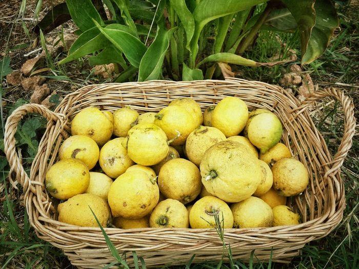 From my garden Lemon Lemons Yellow Fruit Taking Photos Hello World Enjoying Life Getting Inspired Garden Gardening Eating In Sicily My Elios Garden