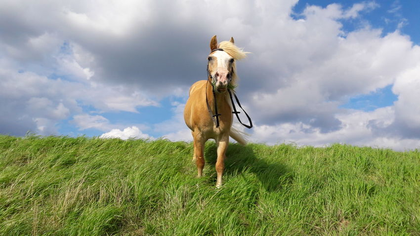 Cloud - Sky Sky Outdoors Field One Animal Grass One Person Day Full Length One Man Only Only Men Domestic Animals Portrait Adult People Nature Adults Only Mammal
