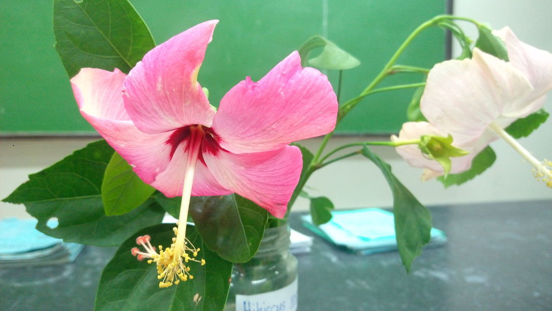 From botany class Flower Pink Color Freshness Petal
