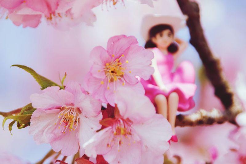 久々出勤...皆さん容赦なし・・・(*´艸)( 艸`*)ププッ Hello World EyeEm Nature Lover Japan Photography Taking Photos Sakura 2017 Pink Color With Fuchiko Enjoying Life Love Happy :)