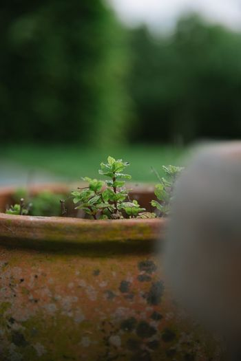 Close-up of potted plant on field