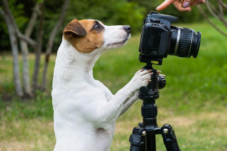 Close-up of a dog holding camera