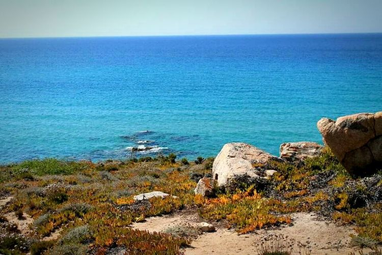 Italy Sardegna Horizon Over Water Beach Nature Tranquility Beauty In Nature Bella Vita Clear Sky Tranquil Scene Water Sea