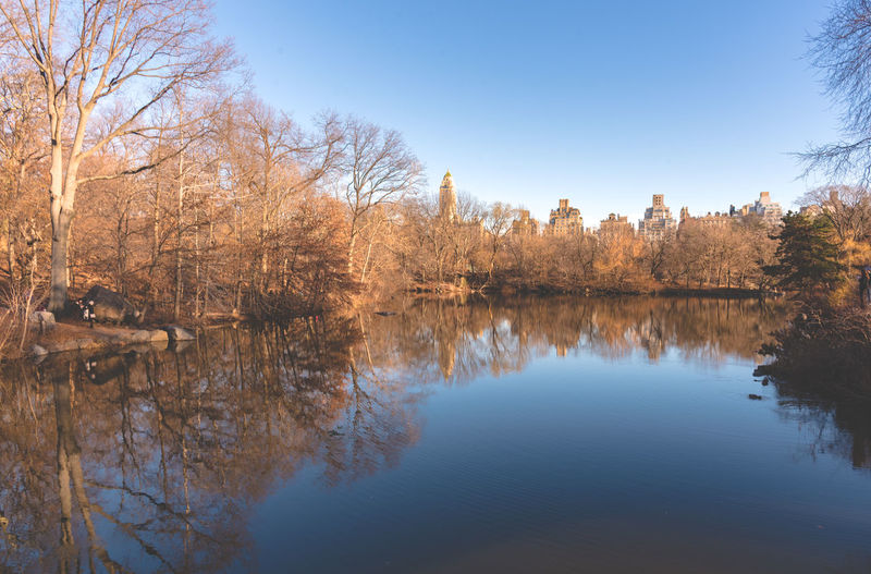 Central Park Day Lake Nature Nature New York New York City No People Outdoors Reflection Reflection Lake Sky Tranquility Tree Water