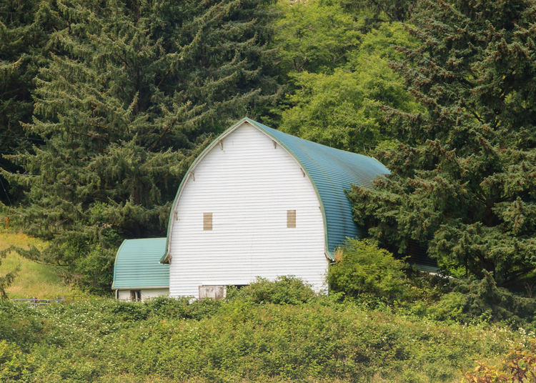 Barn surrounded by trees Agriculture Scene With Ba Architecture Barn Owl Barn Surounded By Fo Beauty In Nature Built Structure Day Grass Green Green Color Growth Landscape Lush Foliage Modern Nature No People Outdoors Plant Scenics Sky Sunny Tranquil Scene Tranquility Tree White Barn Blue Rooft