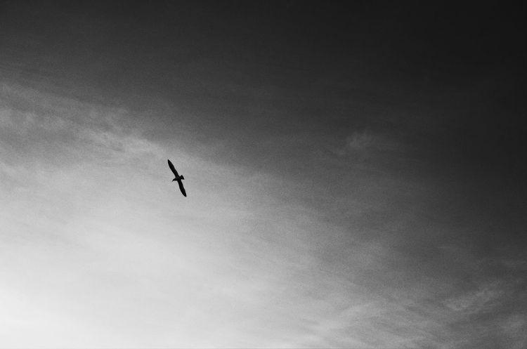 December Skies Sky And Clouds Birds Flying Flying High Bird Flying High Birds In Flight Inspirational Inspiring Bird