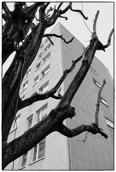 Baum Haus Architecture Blackandwhite Day House Lawoe Low Angle View Nature No People Sky Tree Tree Trunk