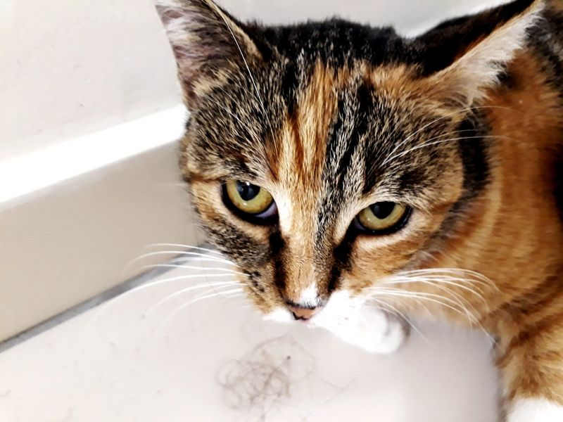 Sleepy Seriusface Domestic Cat Pets Domestic Animals One Animal Animal Indoors  Cute Feline Portrait Animal Themes Domestic Room Looking At Camera Mammal No People Water Close-up Day Be. Ready.