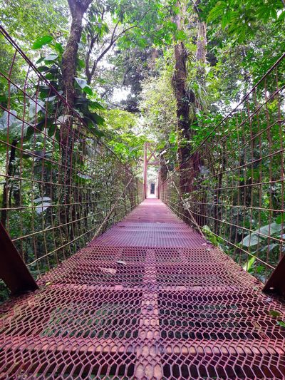 Architecture City Day Green Color Growth Nature No People Outdoors Plant Swingbridge Tree Treetopwalk