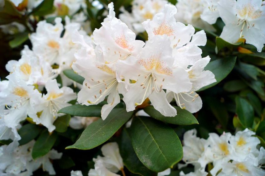 Flower Fragility Beauty In Nature White Color Growth Nature Petal Freshness Springtime Flower Head Close-up No People Plant Day