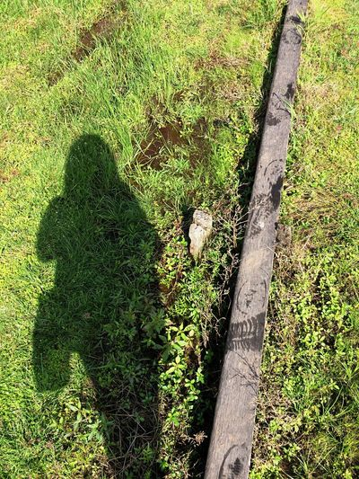 Shadow created Minimalism Shadow Growth Green Color High Angle View Day Nature Outdoors Grass Field No People Plant Tree Beauty In Nature AI Now EyeEmNewHere EyeEm Ready