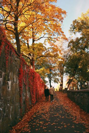 Man And Woman Walking On Footpath By Autumn Trees