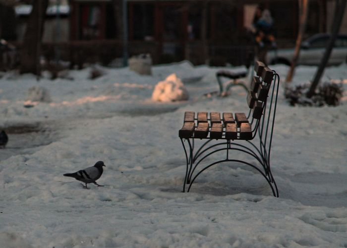 Bird Perching By Empty Chair On Snow Covered Field