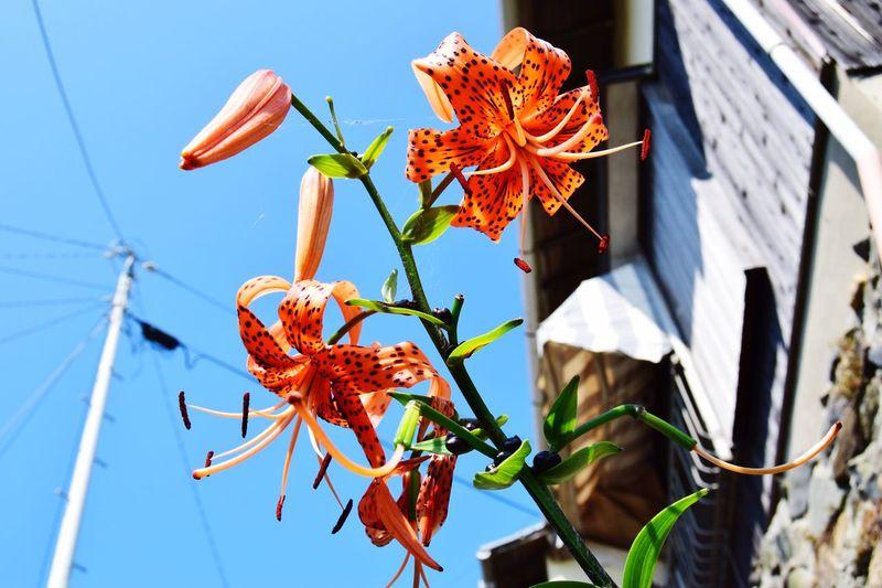 Showcase July Flowers Japan Trip Blue Sky