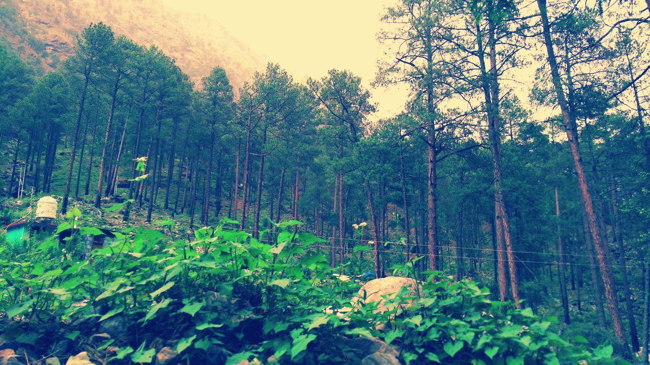 Snehal Kamble