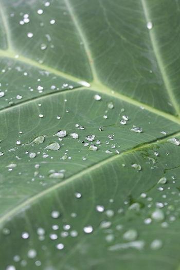 EyeEm Selects Water Leaf Macro Nature EyeEm Nature Lover EyeEm Best Shots Maximum Closeness