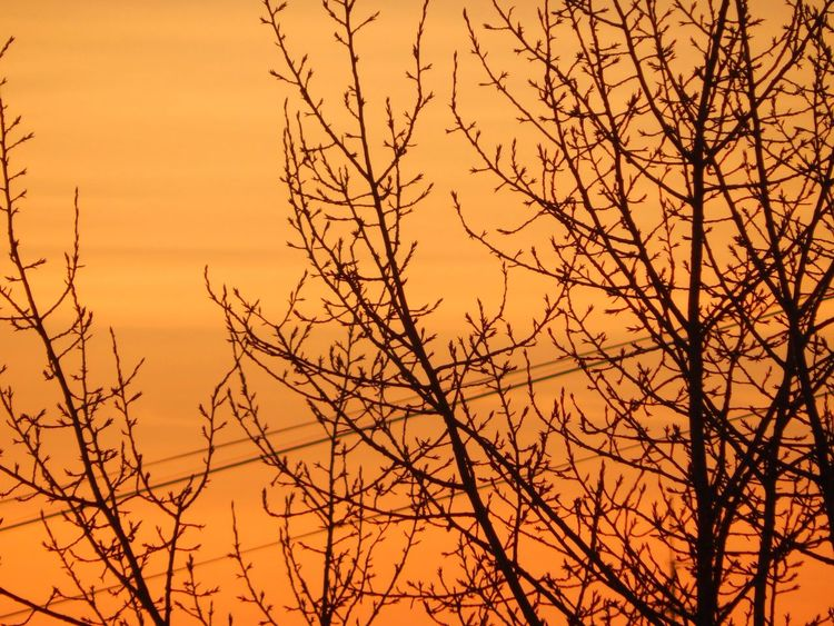 Sun Sunset Orange Color Nature Tree Sky No People Beauty In Nature Dramatic Sky Day Russia Orange City Evening Evening Sky Evening Sun Winter Winter Trees Trees And Sky