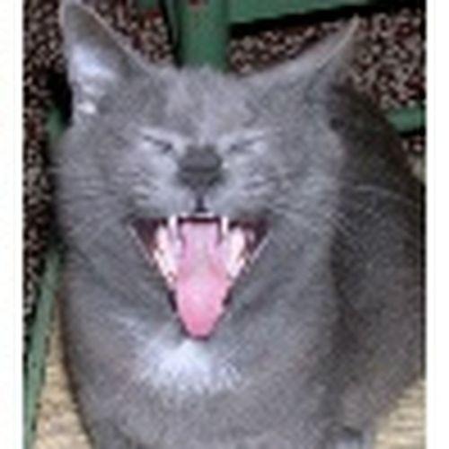 Una risata migliora la giornata