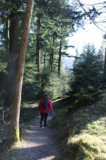 Cumbria England UK Lake District Path Adventure Backpack Beauty In Nature Day Female Forest Forest Photography Full Length Growth Hiking Nature One Person Outdoors People Real People Rear View Track Tree Walking Winlatter
