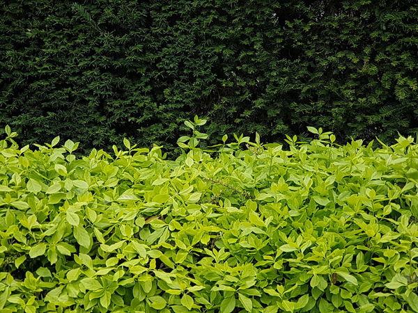 Grass Nature Leaves Green Color Green Leaves Green Wall Nature Wall Green Leaves Backfround Green Leaves. Wall Textures Wall Cover Green Background Garden Photography Garden Garden Wall