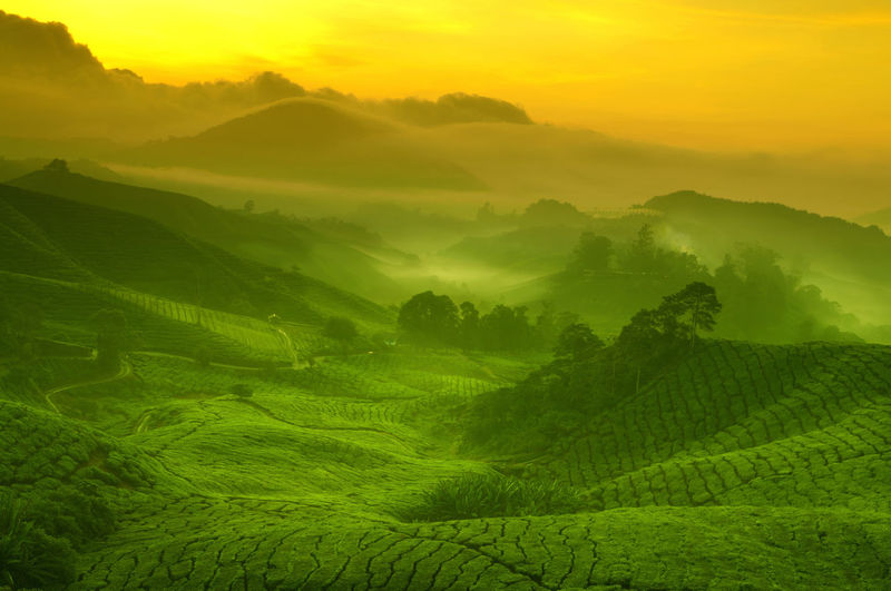 Agriculture Beauty In Nature Environment Field Fog Green Color Hazy  Idyllic Land Landscape Nature No People Non-urban Scene Outdoors Plant Rolling Landscape Rural Scene Scenics - Nature Sky Sun Sunset Tea Crop Tranquil Scene Tranquility