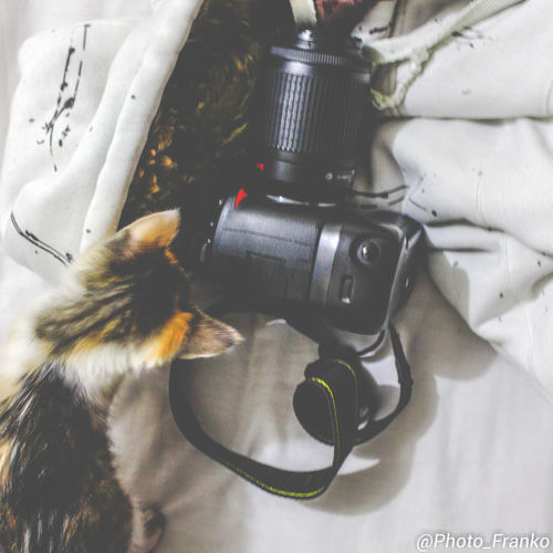 Camera Animal Themes Close-up Day Domestic Animals Food Freshness Indoors  Mammal No People One Animal Pets Table