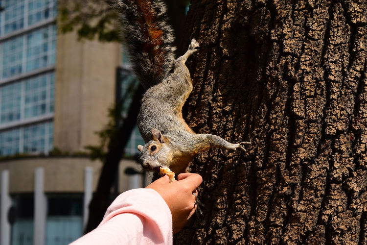 Adapted To The City Animal Themes Animals In The City Day Human Hand Nature One Animal Outdoors Rodent Squirrel Tree Wildlife