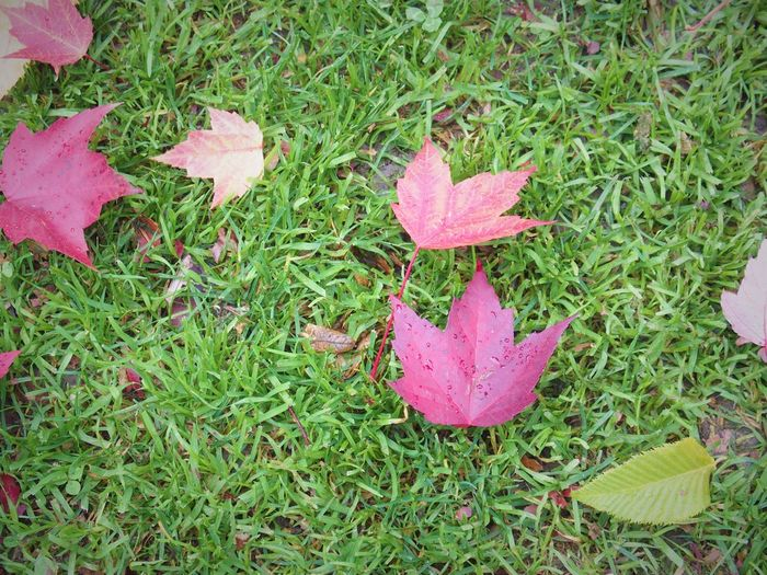 Leaves on grassy field