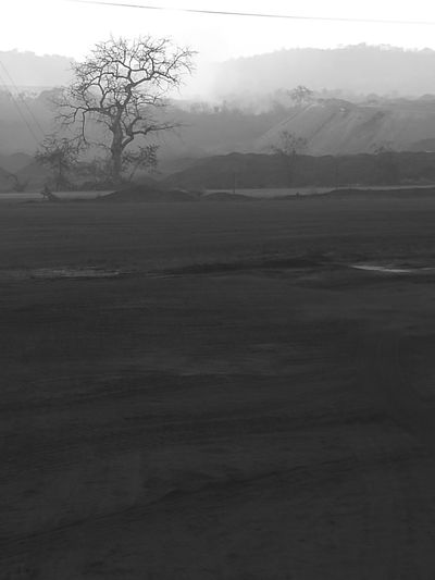 Fog Nature Landscape Beauty In Nature Outdoors Scenics Morning Tree No People Tranquil Scene Tranquility Rural Scene Ground Desolate Scene Monochrome Photography The Week On EyeEm EyeEmNewHere Human Destruction Mining Exploration Lost In The Landscape
