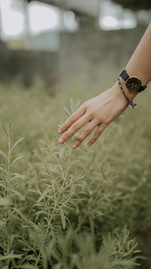 Midsection of woman hand on plant at field