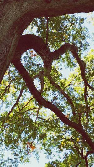 Tree Porn Living Life