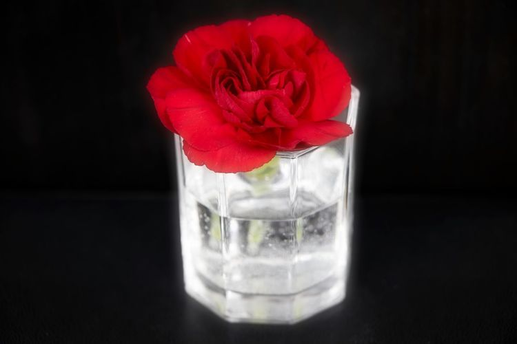 Close-up of red rose on glass table