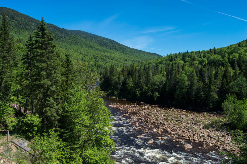 Pine tree forest with river and hills, Gaspé, Canada Canada Gaspesie Into The Wild Outdoors Pine Tree River Bank  River View Scenics