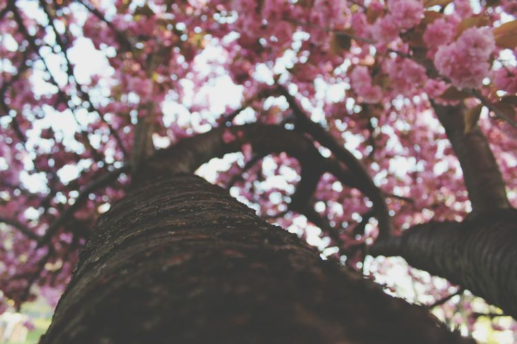 Beyond the shadows.. Flowers Pink Flower Trees Perspectives Photography Jazz Beauty Spring Sabrina Newjersey TreePorn Tree Travel Photography Travel Blur Hugging A Tree Tree And Sky Tree Trunk
